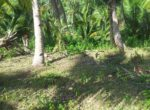 coconut-trees-at-the-slightly-sloping-area-of-3436sqm
