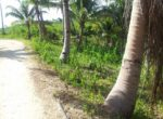 the-part-of-3436-sqm-slightly-sloping-full-of-coconut-trees-and-few-mango-trees